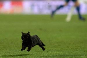 """""""Czarny kot nie może robić różnicy"""""""