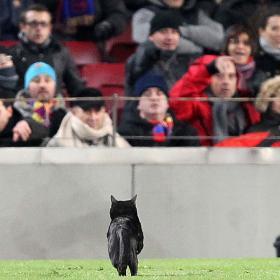 Koty na Camp Nou od 1987 roku