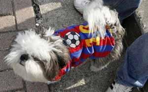 Psy w Santander także kibicują Messiemu