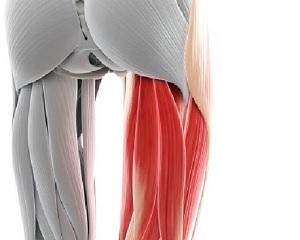 Wyjaśniamy uraz mięśnia dwugłowego uda
