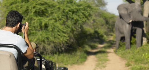Śladami dzikiej przyrody, czyli safari Kenia